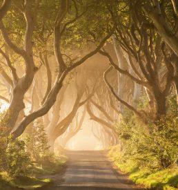 Magic on the Kingsroad